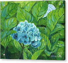 Acrylic Print featuring the painting Morning Hydrangea by Jingfen Hwu