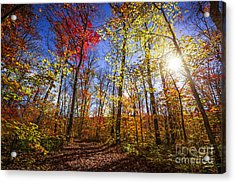 Morning In Autumn Forest Acrylic Print by Elena Elisseeva