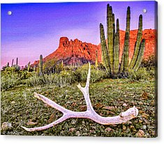 Morning In Organ Pipe Cactus National Monument Acrylic Print by Bob and Nadine Johnston