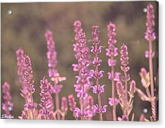 Morning In Pink Acrylic Print