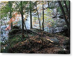 Morning In The Forest Acrylic Print by Becky Neu