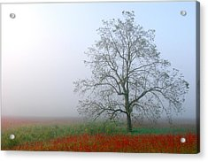 Acrylic Print featuring the photograph Morning In The Meadow by Wendell Thompson