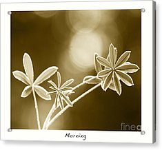Morning Acrylic Print by Artist and Photographer Laura Wrede
