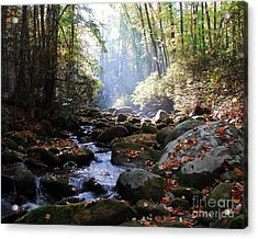 Morning Light 3 Acrylic Print by Mel Steinhauer