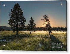 Morning Light In Yellowstone Acrylic Print by Sandra Bronstein