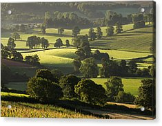 Morning Light On Fields Acrylic Print