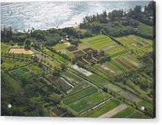 Morning Light Over Kauai Taro Fields Acrylic Print by Kai Hyde