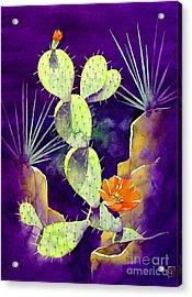 Morning Light Acrylic Print by Robert Hooper