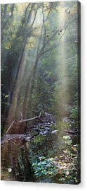Morning Light Acrylic Print by Tom Mc Nemar