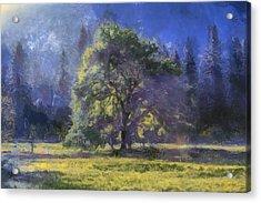 morning light Yosemite Valley Acrylic Print