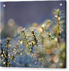 Morning Magic Acrylic Print