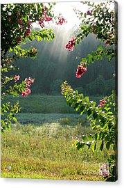 Morning Marsh Acrylic Print by Carol Groenen