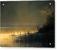 Acrylic Print featuring the photograph Morning Mist by Dianne Cowen
