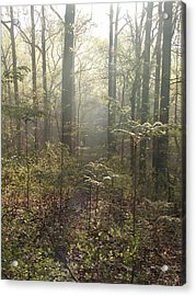 Morning Mist In The Forest Acrylic Print by Bill Cannon