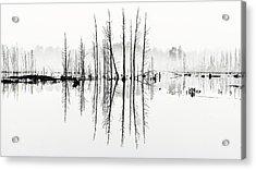 Morning Mystery Acrylic Print by Louis Dallara