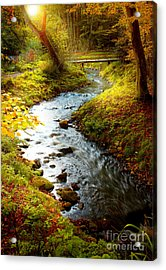 Acrylic Print featuring the photograph Morning Nature by Boon Mee