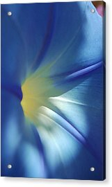 Morning Of Glory Acrylic Print by Tamyra Crossley