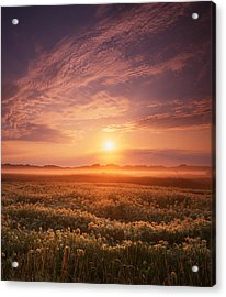 Morning On The Fen Acrylic Print