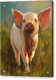 Morning Pig Acrylic Print