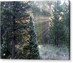 Acrylic Print featuring the photograph Morning Rays by Shane Bechler