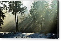 Acrylic Print featuring the photograph Morning Rays by Julia Hassett