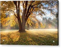 Morning Shadows Acrylic Print by Bill Wakeley
