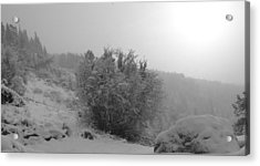 Morning Snow Shower Acrylic Print