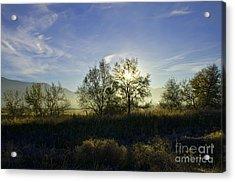 Morning Sun  Acrylic Print by Nicole Markmann Nelson