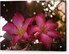 Acrylic Print featuring the photograph Morning Sunshine And Rain by Miguel Winterpacht