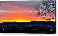 Acrylic Print featuring the photograph Morning Tangerine Glow by Lara Ellis