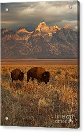 Morning Travels In Grand Teton Acrylic Print by Sandra Bronstein
