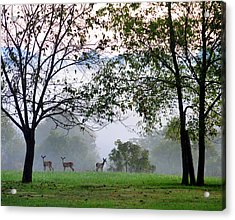 Morning Trio Acrylic Print
