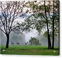 Morning Trio Acrylic Print by Gail Butler
