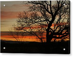 Morning View In Bosque Acrylic Print
