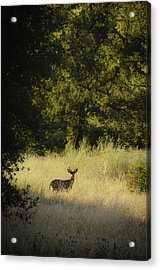 Morning Visitor 2 Acrylic Print