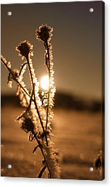 Acrylic Print featuring the photograph Morning Walk by Miguel Winterpacht