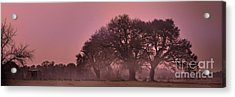 Morning Whispers In Mississippi Acrylic Print