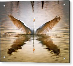 Morning Wings An Egret Awakes Acrylic Print