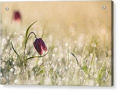 Morningdew Acrylic Print