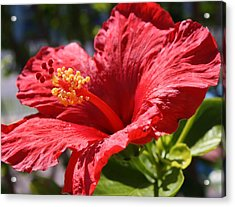 Mornings Delight Acrylic Print by Bruce Bley