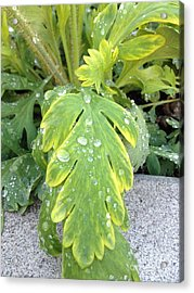 Acrylic Print featuring the photograph Mornings Dew by Margie Amberge