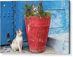 Morocco, Rabat, Sale, Kasbah Des Acrylic Print by Emily Wilson