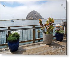 Acrylic Print featuring the photograph Morro Bay And Plants by Debra Thompson