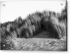 Acrylic Print featuring the photograph Morro Beach Shrubbery by Terry Garvin