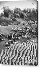 Acrylic Print featuring the photograph Morro Beach Textures Bw by Terry Garvin