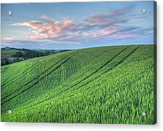 Spring Wheat And Moscow Mtn. Acrylic Print