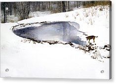 Moses On Ice Acrylic Print by Tom Wooldridge