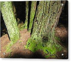 Moss Against The Shadows Acrylic Print