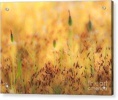 Moss And Flowers - Greensboro North Carolina Acrylic Print by Dan Carmichael