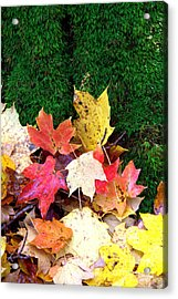 Acrylic Print featuring the photograph Moss And Leaves by Jim McCain